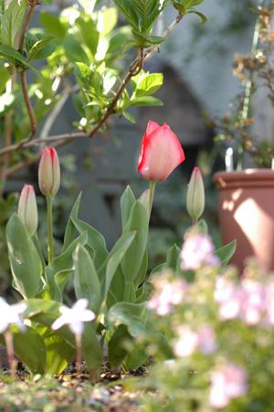 pinkg2009327.jpg