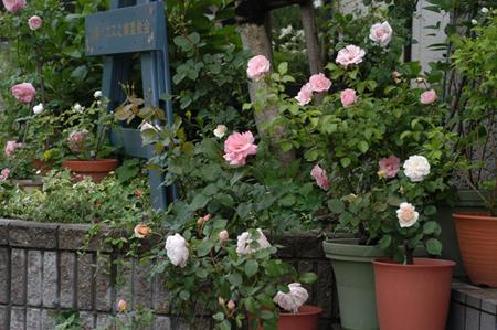 pinkg2009517-1a.jpg