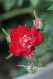 redk2009521-2.jpg