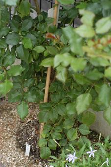 sahara2009622-1.jpg