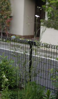 sakuragai2009419-1.jpg