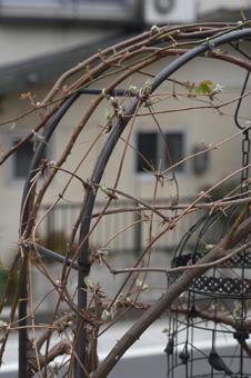 shirohanahannshouzuru2009309-1.jpg