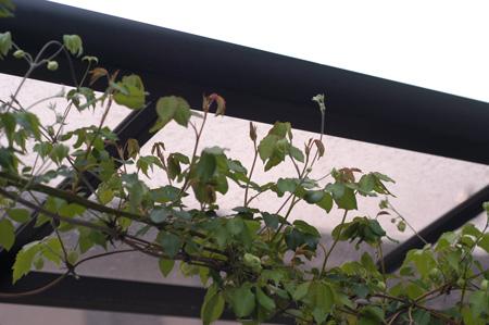 shirohanahanshouzuru2009405-2.jpg