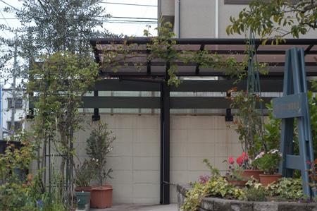 shirohanahanshouzuru2009405.jpg