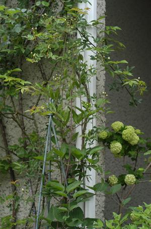 shiromokkou2009420-3.jpg