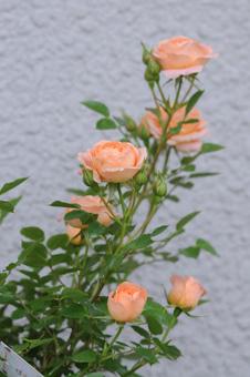 sweetdream2009425-4.jpg