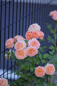 sweetdream2009505-3.jpg