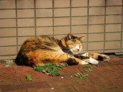 猫IMGP5066