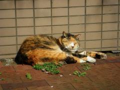 猫IMGP5067