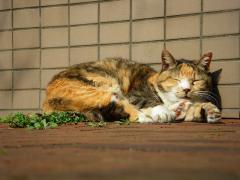 猫IMGP5071