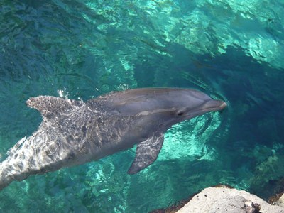 dolphine BI