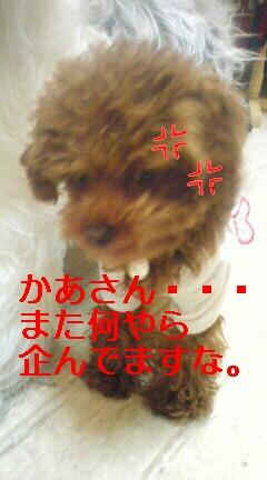 20090213120157.jpg