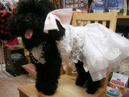 盛岡 犬 ペットショップ ペットグッズ 犬服 ドレス