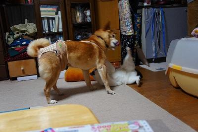 tatakai4.jpg