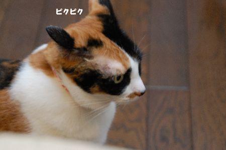 20090104mikan.jpg