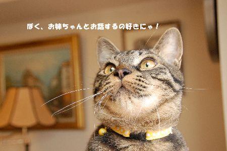 20090113kotetsu.jpg