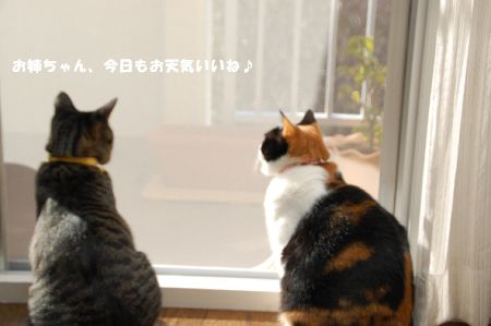 20090113mikankotetsu.jpg