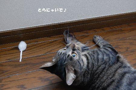 20090114kotetsu3.jpg