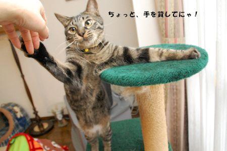 20090120kotetsu3.jpg