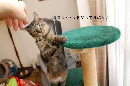 20090120kotetsu4.jpg