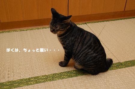 20090121kotetsu.jpg