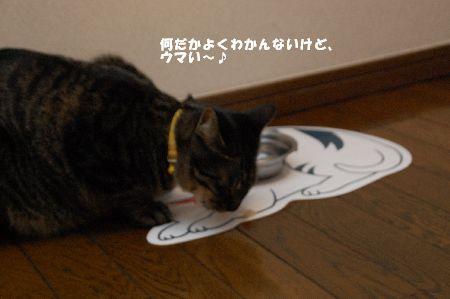 20090128kotetsu.jpg