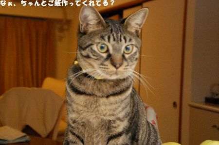 20090130kotetsu.jpg