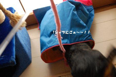 20090203kotetsu3.jpg