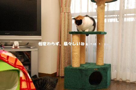 20090205mikankotetsu.jpg