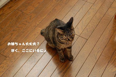 20090217kotetsu4.jpg