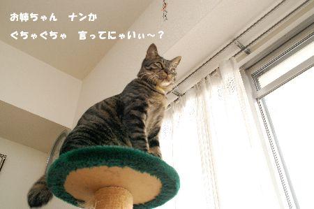 20090304kotetsu.jpg