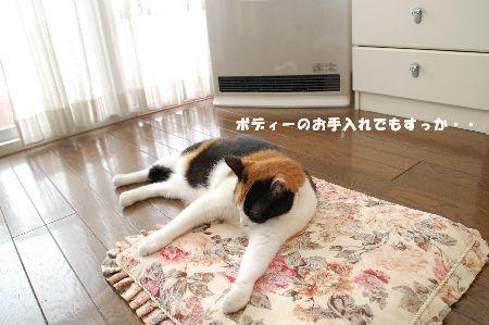 20090304mikan2.jpg