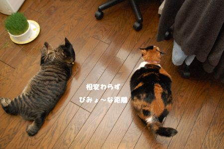 20090307mikankotetsu2.jpg