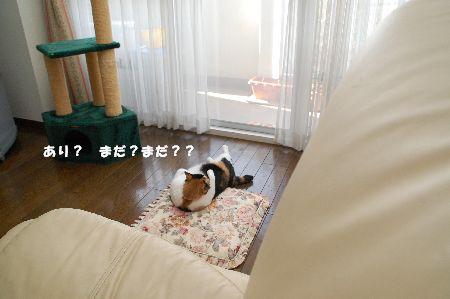 20090311mikan2.jpg