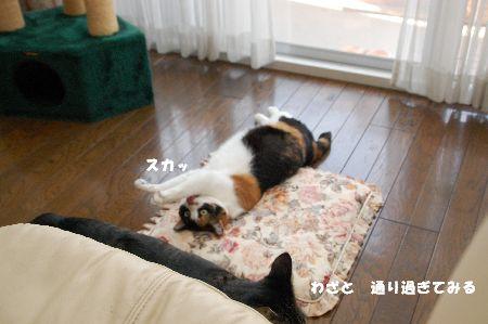 20090311mikankotetsu2.jpg