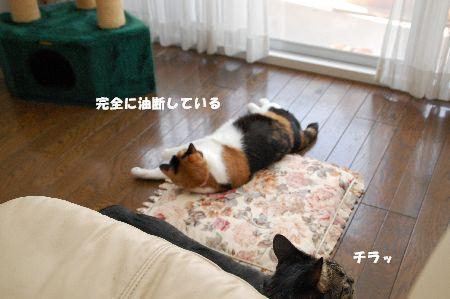 20090311mikankotetsu3.jpg