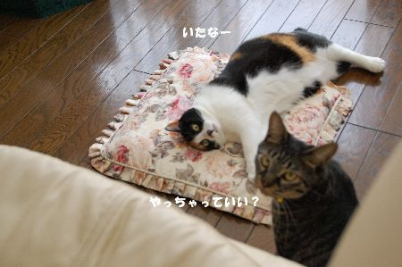 20090311mikankotetsu4.jpg