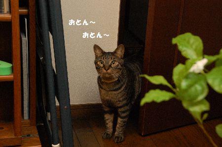 20090314kotetsu5.jpg