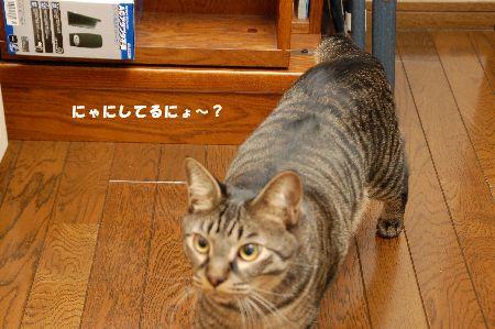 20090314kotetsu6.jpg