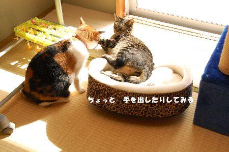 20090316mikankotetsu5.jpg