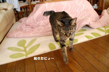 20090317kotetsu.jpg