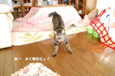 20090317kotetsu2.jpg