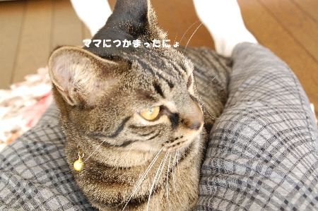 20090317kotetsu3.jpg