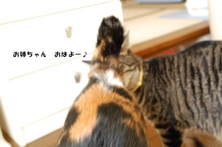 20090317mikankotetsu.jpg