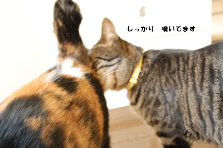 20090317mikankotetsu3.jpg