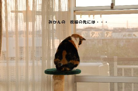 20090319mikan.jpg