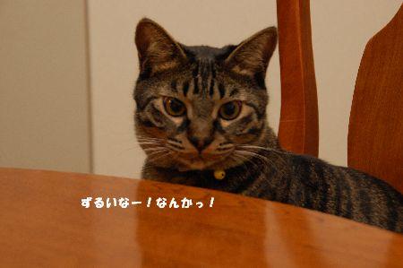 20090329kotetsu2.jpg