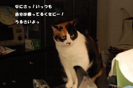 20090329mikan2.jpg