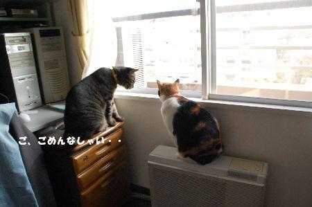 20090407mikankotetsu2.jpg