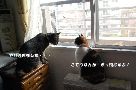 20090407mikankotetsu7.jpg